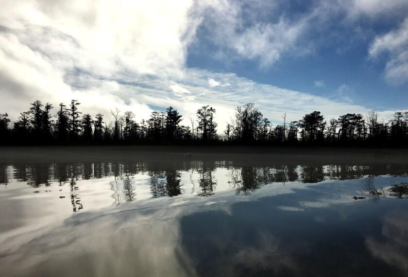 The 12 Mile Island shoreline where Ben Raines discovered the wreck of the Clotilda