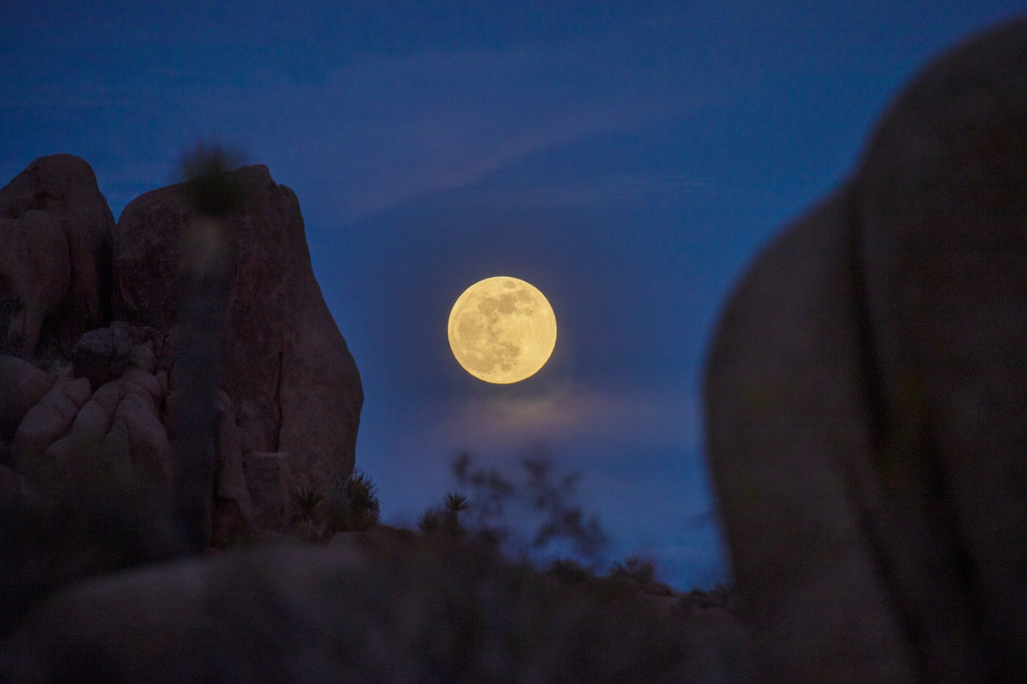 Clouds surround the super flower blood moon rising above rocks and Joshua trees