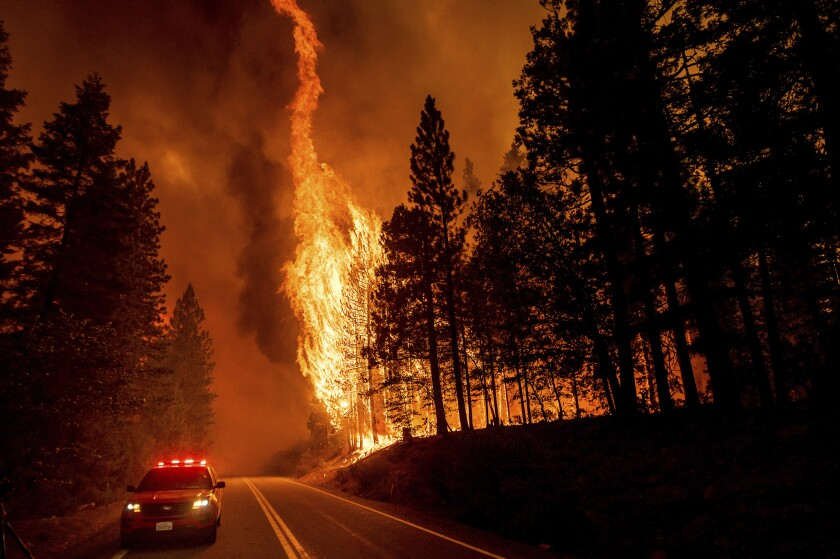 FILE - In this Aug. 3, 2021, file photo, flames leap from trees as the Dixie Fire jumps Highway 89 north of Greenville in Plumas County, Calif. Each year thousands of acres of dense timber are thinned near remote communities, all designed to slow the spread of massive wildfires. While most scientific studies find such forest management is a valuable tool, environmental advocates say data from recent gigantic wildfires support their long-running assertion that efforts to slow wildfires have instead accelerated their spread. (AP Photo/Noah Berger, File)