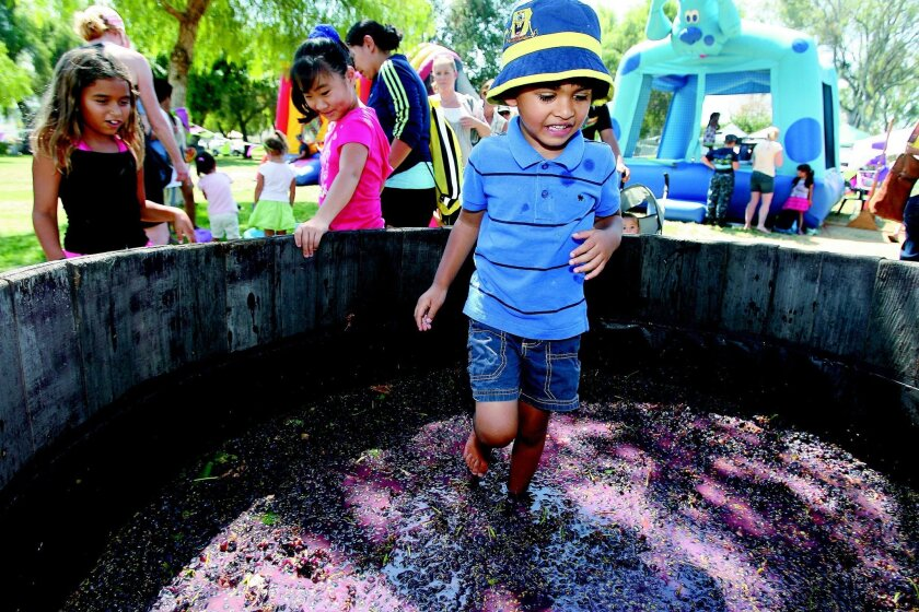 Vishnu Moorthy, 4, steps in a vat of grapes during the Grape Day Festival in Escondido.