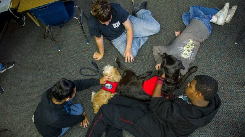 LifeSchool students at Southwest High pet therapy dogs Cami (chocolate Labrador) and Marty, during class on Friday