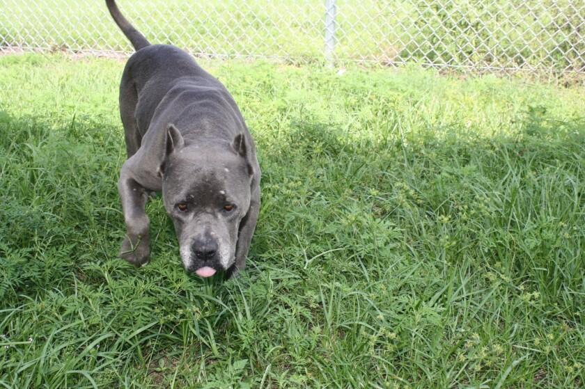 Bayou, a dog reported as stolen from a Southern California home three years ago, was discovered at an animal shelter in Florida.
