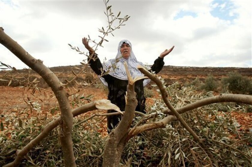 A Palestinian woman gestures next to a damaged olive tree in the village of Qusra in the northern West Bank, Thursday, Oct . 6, 2011. According to Palestinian residents, some 180 olive trees were uprooted by Jewish settlers from a nearby settlement Thursday. (AP Photo/Nasser Ishtayeh)