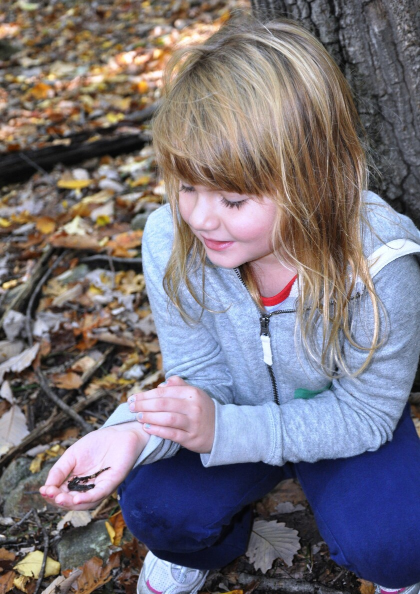 A young girl finds a salamander during one of the past family hikes sponsored by the National Wildlife Federation.