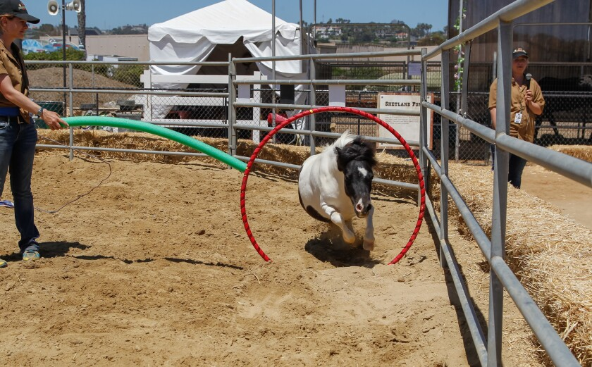 What's wild at the San Diego County Fair - The San Diego