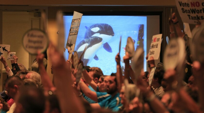 LONG BEACH, CALIF. -- THURSDAY, OCTOBER 8, 2015: An orca whale image is shown on the screen as People for the Ethical Treatment of Animals (PETA) and other animal rights groups hold up signs next to Sea World supporters attending the California Coastal Commission meeting to consider a proposal by SeaWorld to build a bigger holding area for its orca whales at the Long Beach Convention Center in Long Beach, Calif., on Oct. 8, 2015. Animal rights groups oppose the plan. (Allen J. Schaben / Los Angeles Times)