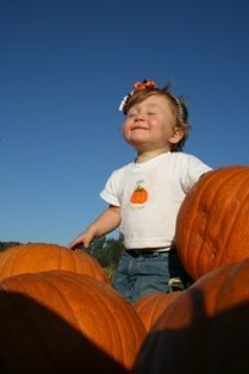 Winner of the Bates Nut Farm 2011 photo contest. Courtesy of the Huggins Family.