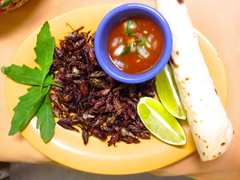Monte Alban's serves crickets only a few months out of the year when they're at their plumpest. Coala Valley Farms, an edible cricket farm, could open soon in Van Nuys.