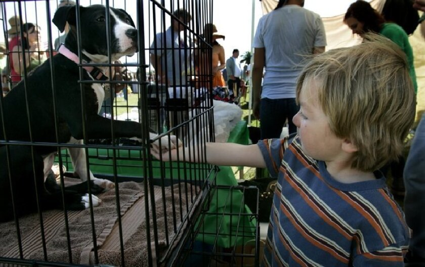 Rexx Pastore, 4, held the paw of 3-month-old Bella, a pit bull mix  available for adoption yesterday at the Doggie Street Festival in Point  Loma.