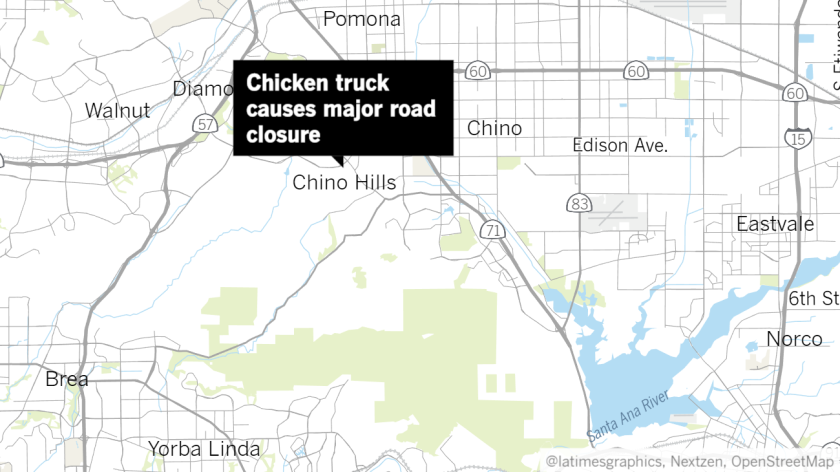 Big rig full of chickens drives through construction zone near freeway in Chino Hills