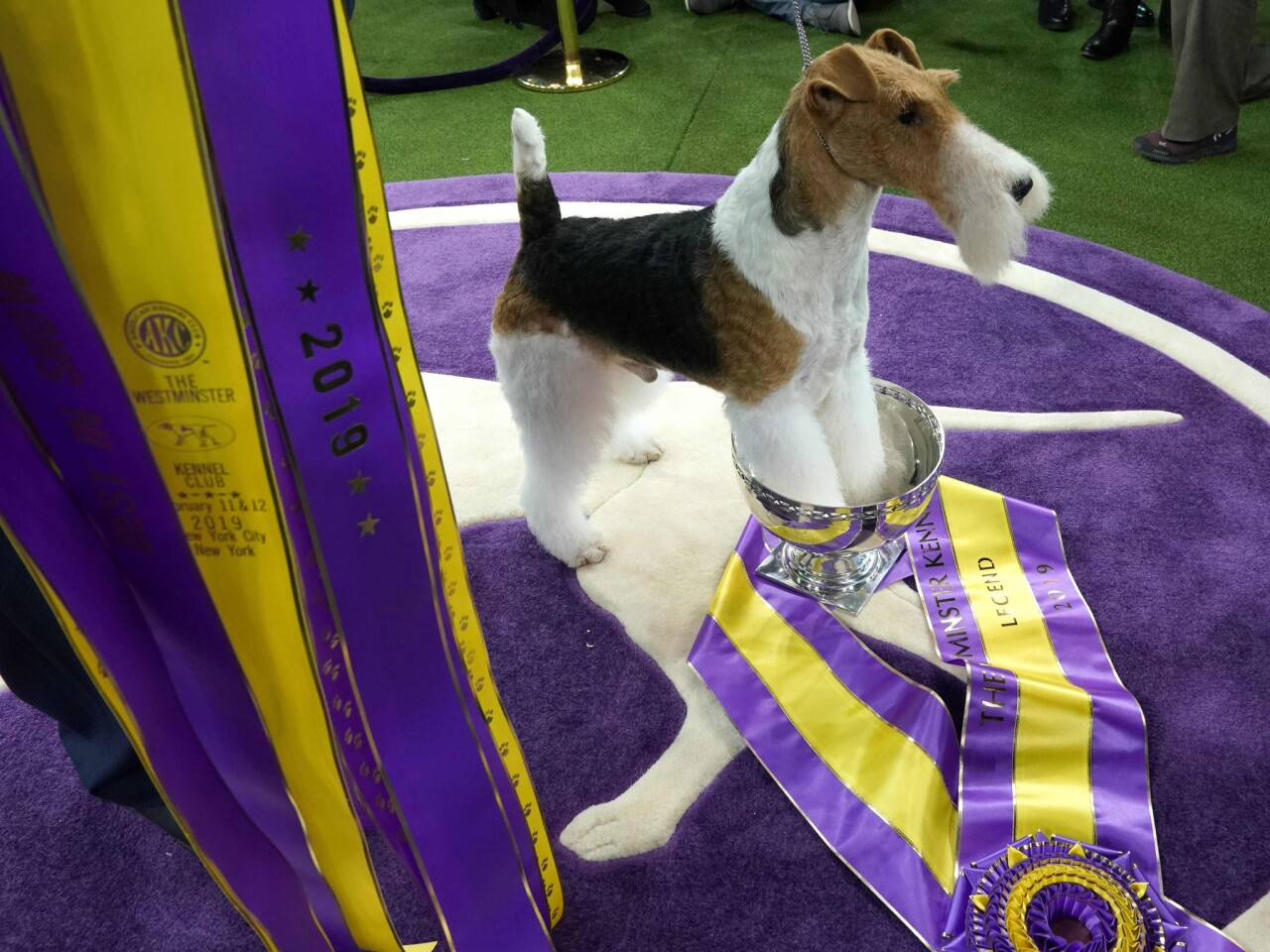 King, a wire hair fox terrier, poses after winning Best in Show at the Westminster Kennel Club Dog Show at Madison Square Garden in New York on Feb. 12.