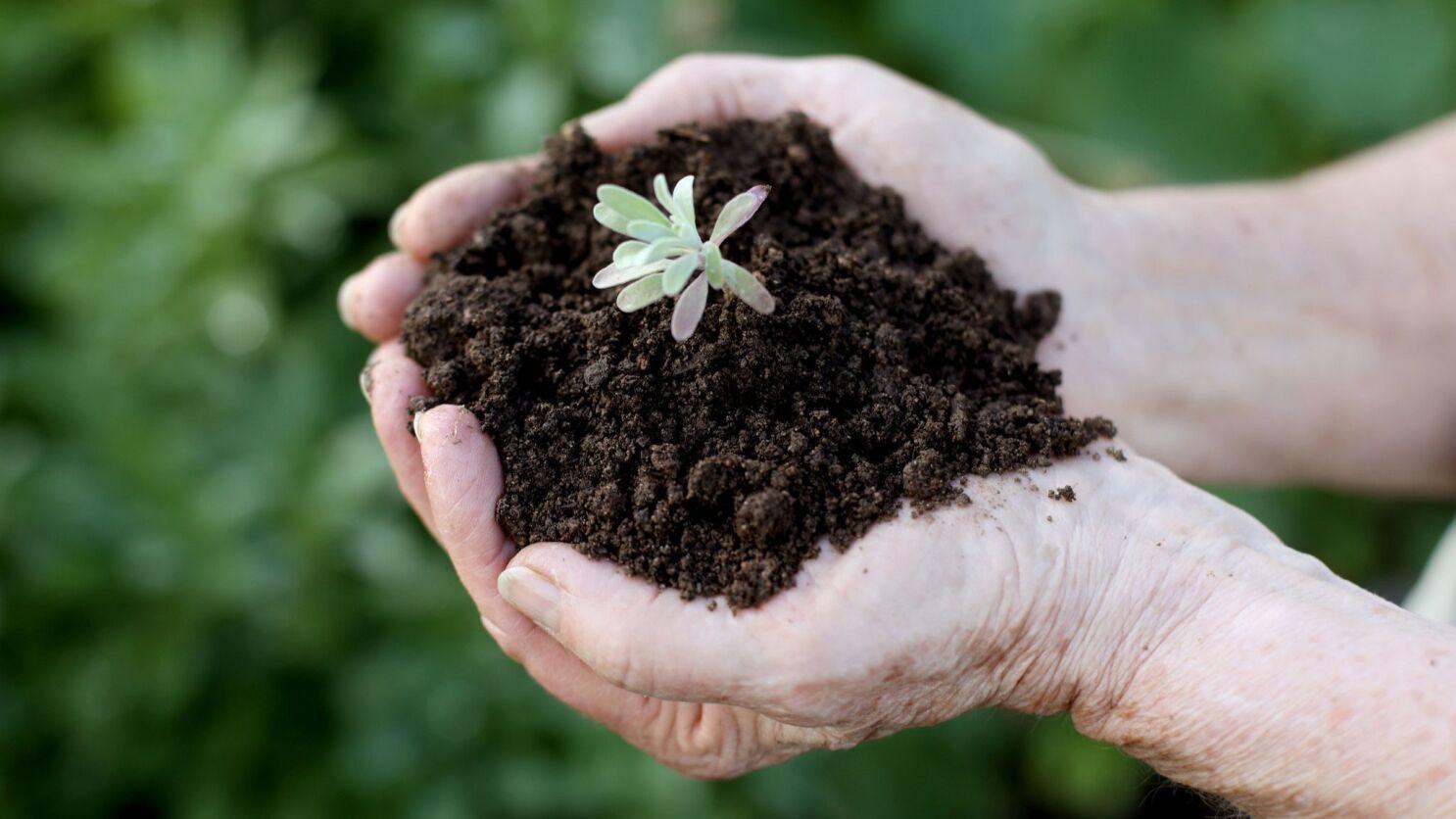 Georgia South Red Clay Dirt Soil Nutrient Rich Soil Retains Moisture