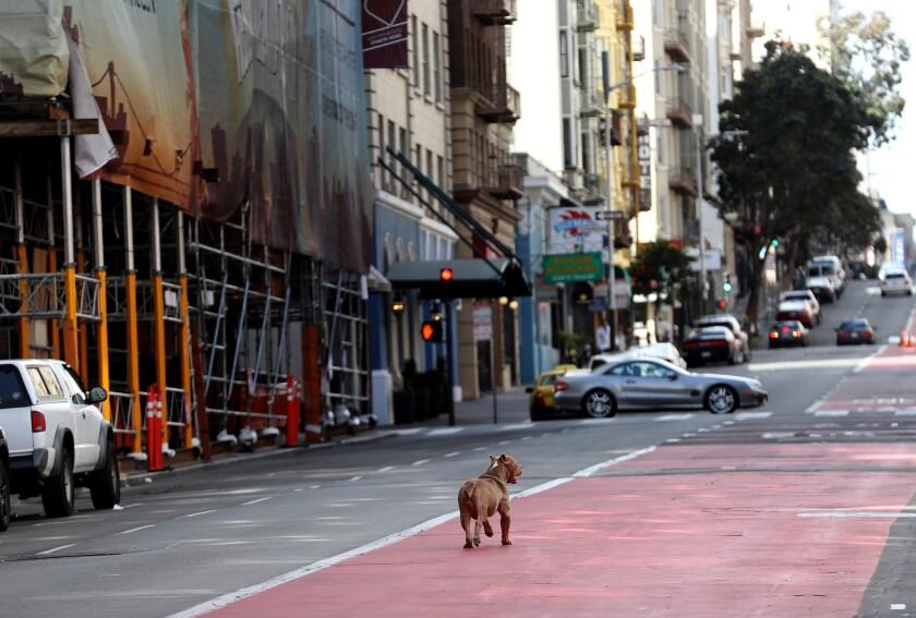 Empty Geary Boulevard in San Francisco