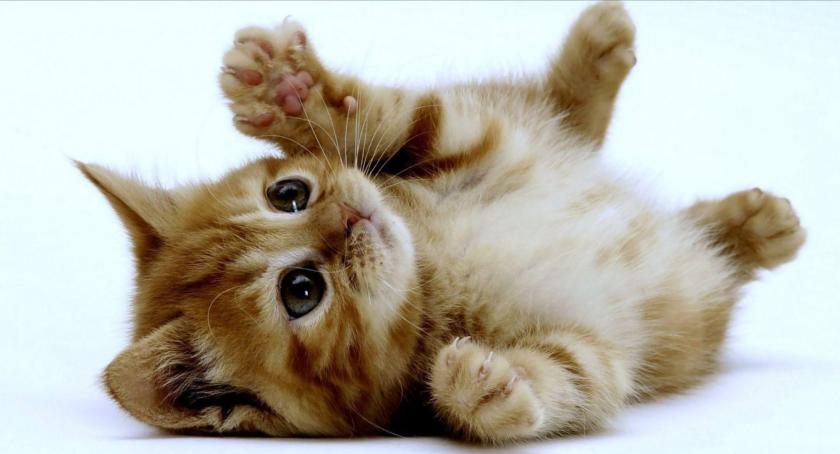 11 cosas por las que AMAS a tu gato y no lo sabías (o quizá sí)
