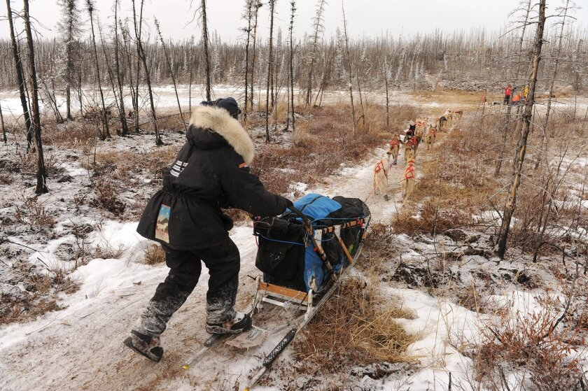 Kristy Berington mushes down the Iditarod Trail in the middle of the Farewell Burn during the 2014 Iditarod Trail Sled Dog Race on Tuesday, March 4, 2014.  (AP Photo/The Anchorage Daily News, Bob Hallinen)