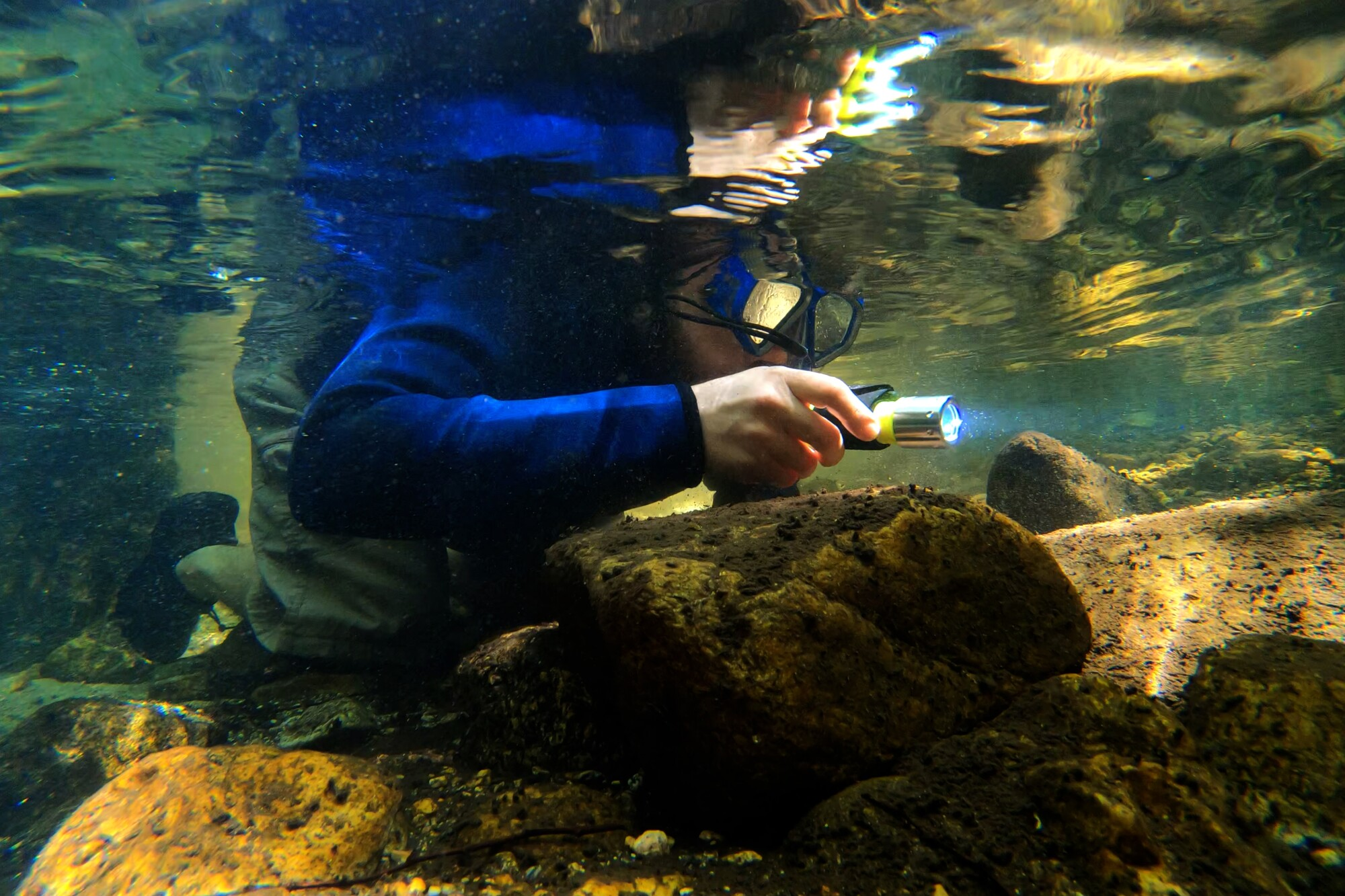 Angel Pinedo snorkels in shallow water to do a survey of rainbow trout and other fish in the Arroyo Seco.