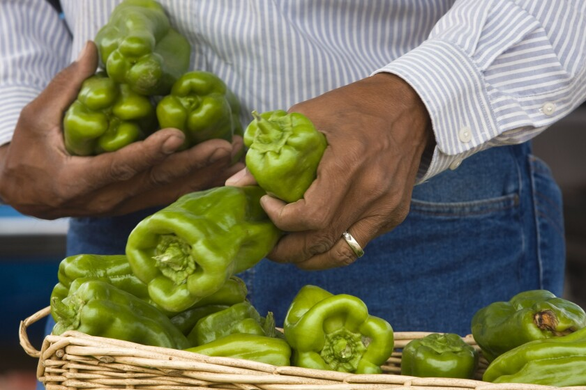 A person arranges bell peppers in a basket.