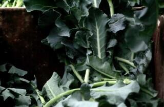 Market Fresh: Broccoli