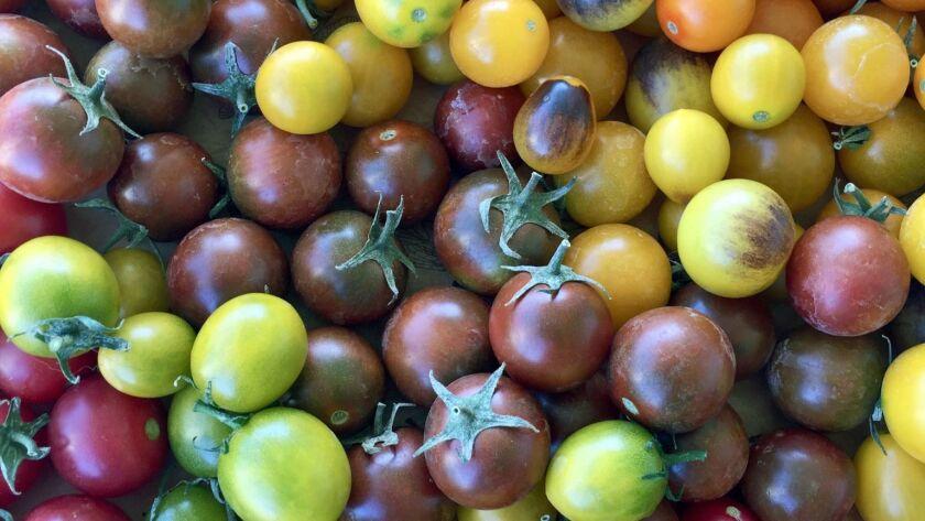 5 Secrets To Growing Big, Fat, Juicy Tomatoes - Los -9434