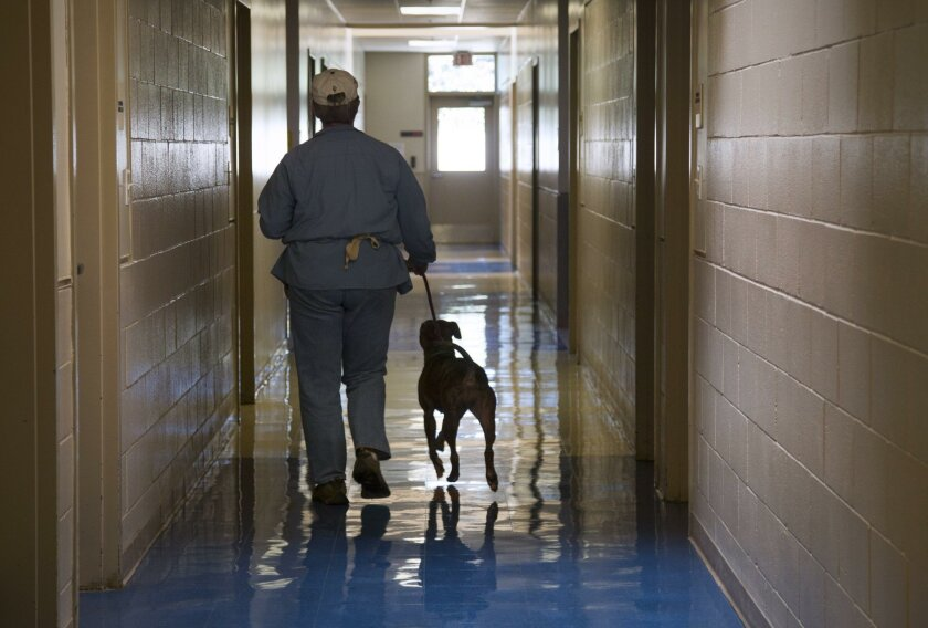 A volunteer walks with a dog down a corridor at San Diego County's Kroc-Copley Animal Shelter in Linda Vista.
