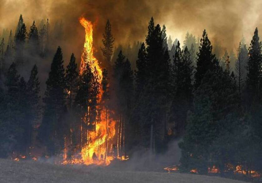 Risky measures to save big trees from Rim fire worked