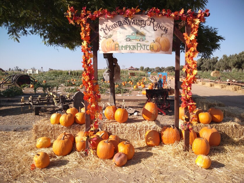 Mountain Valley Ranch pumpkin patch has been selling pumpkins for 23 years.