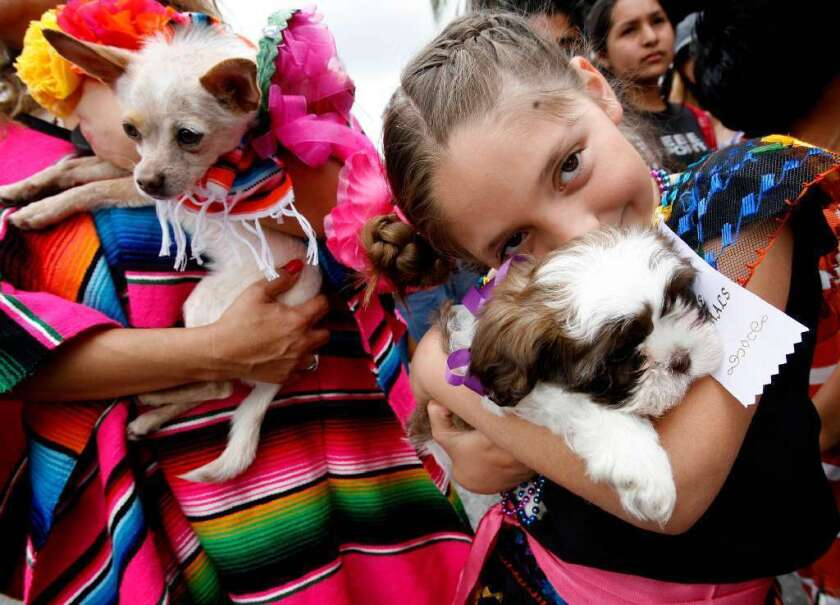 Hundreds of pet owners are expected at the annual Blessing of the Animals on Olvera Street.