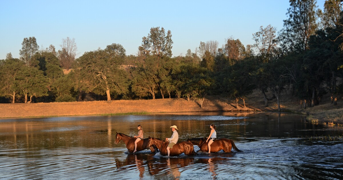 Why a cattle drive at a California dude ranch may be the ideal vacation to escape the pandemic