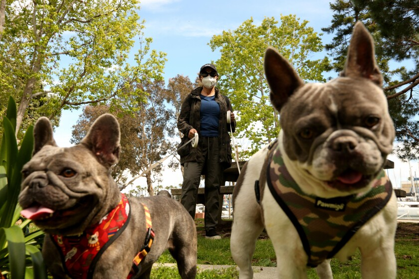 Nilou Zonozi wears a mask to walk her French bulldogs Ruby, left, and Hansel on April 8 at Burton Chase Park in Marina del Rey.