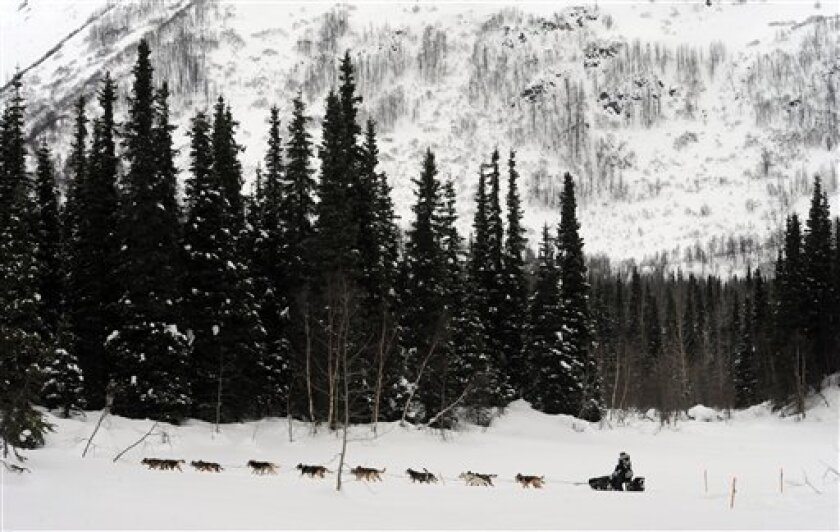Scott Janssen heads down the trail after departing the Finger Lake checkpoint in Alaska during the Iditarod Trail Sled Dog Race on Monday, March 4, 2013. (AP Photo/The Anchorage Daily News, Bill Roth)