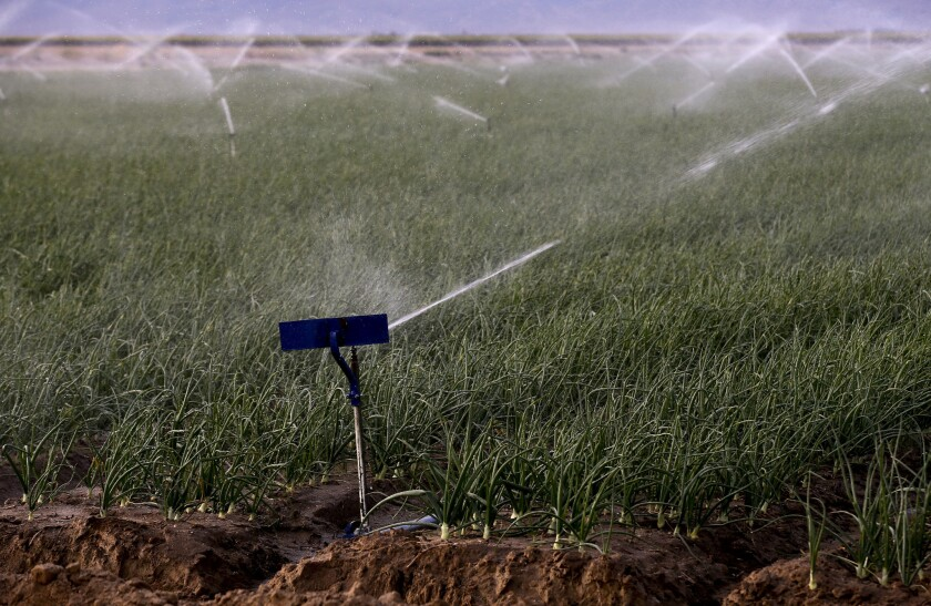 The Central Valley stretches 450 miles from Bakersfield north to Redding. Above, sprinklers work on the crops at Valpredo Farms south of Bakersfield in April.