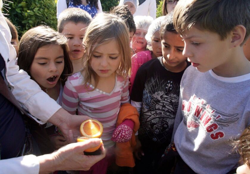 Kids discover the secret of lemons and other fruits during Farm Day.