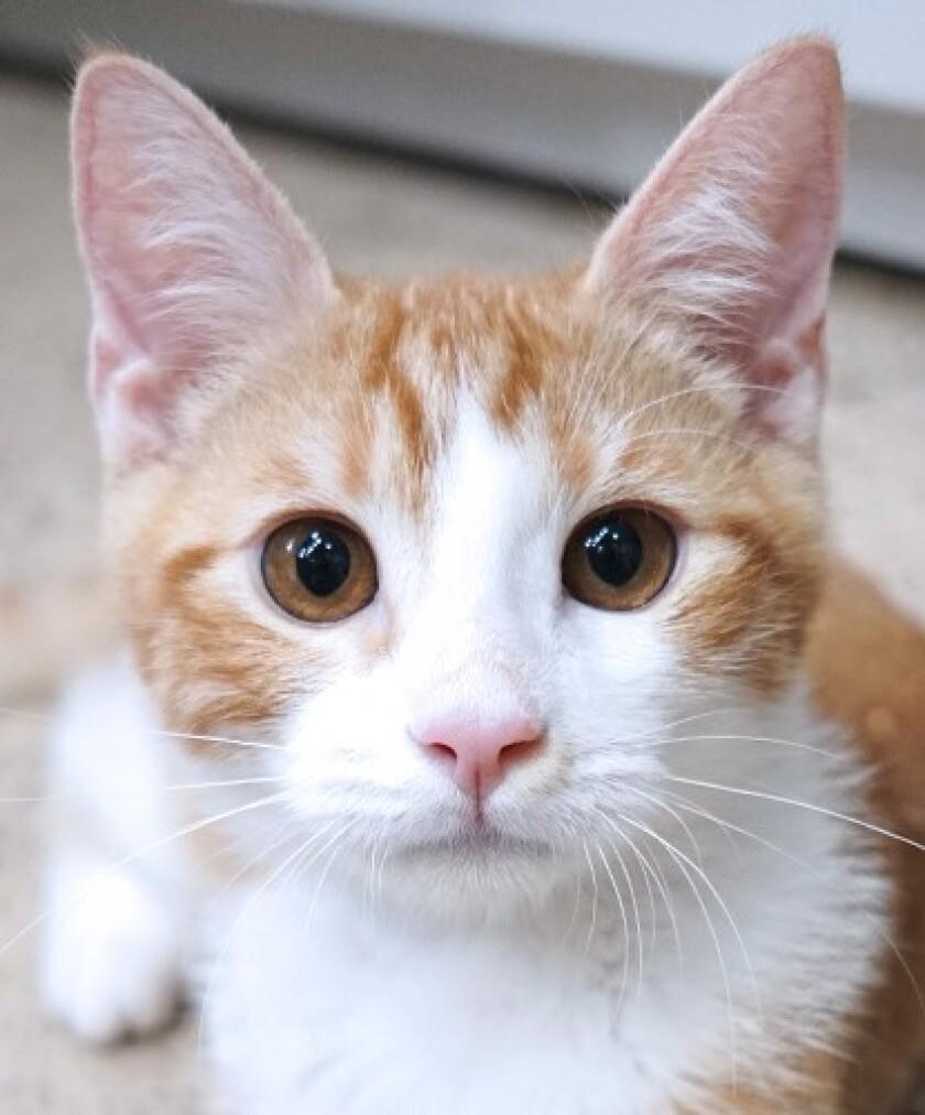 A 5-month-old kitten, named, 'Lemon Pie.'