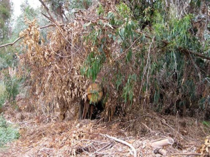 Tree stumps and brush line Torrey Pines Road. Photo: Dave Schwab