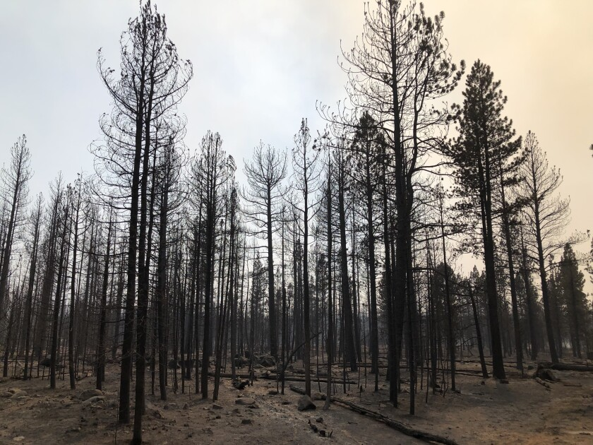 The Bootleg Fire burned through stands of pines on the rim above Summer Lake this week.