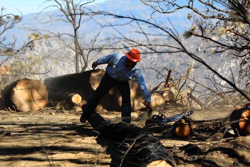 In Rim fire's aftermath, controversy over the recovery effort