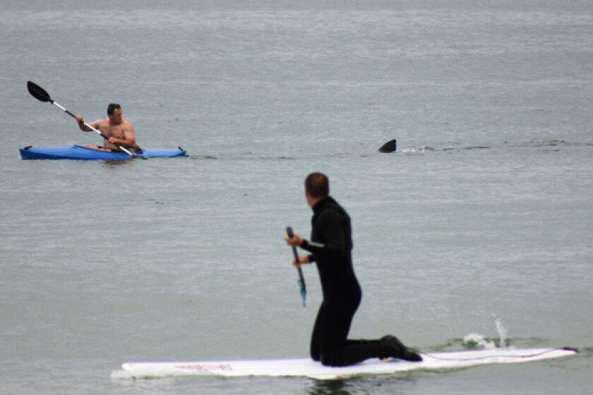 Walter Szulc Jr., in the kayak at left, looks back at the dorsal fin of an approaching shark at Nauset Beach in Massachusetts' Cape Cod. No injuries were reported in the incident July 7, but beach-goers -- not to mention the kayaker -- admitted to being unnerved. More: Beach-goers scream 'Shark!'