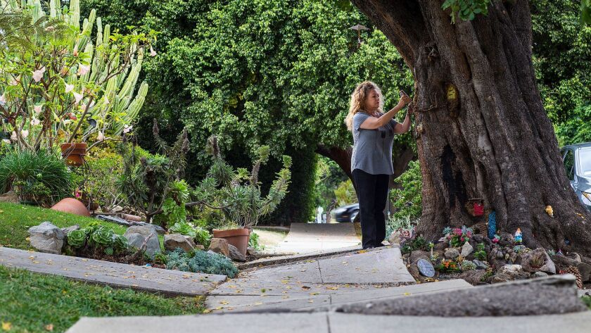 You can see how badly the sidewalk is buckled. Rita Tateel says the fairy tree forces people to slow down, and watch their step.