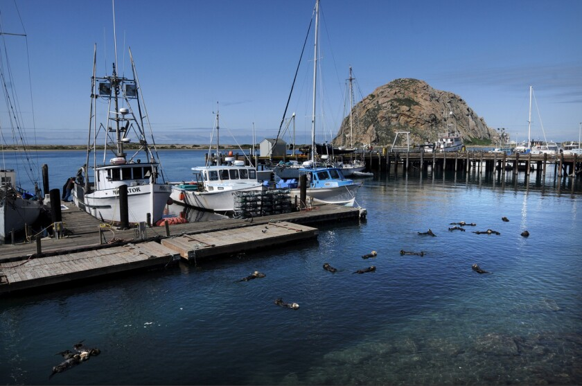Las playas, restaurantes y bares en el condado de San Luis Obispo están abiertos.