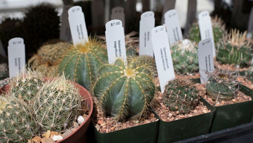 LOS ANGELES — September 6, 2017 — A variety of cacti at Desert Creations Nursery and Gift Shop i
