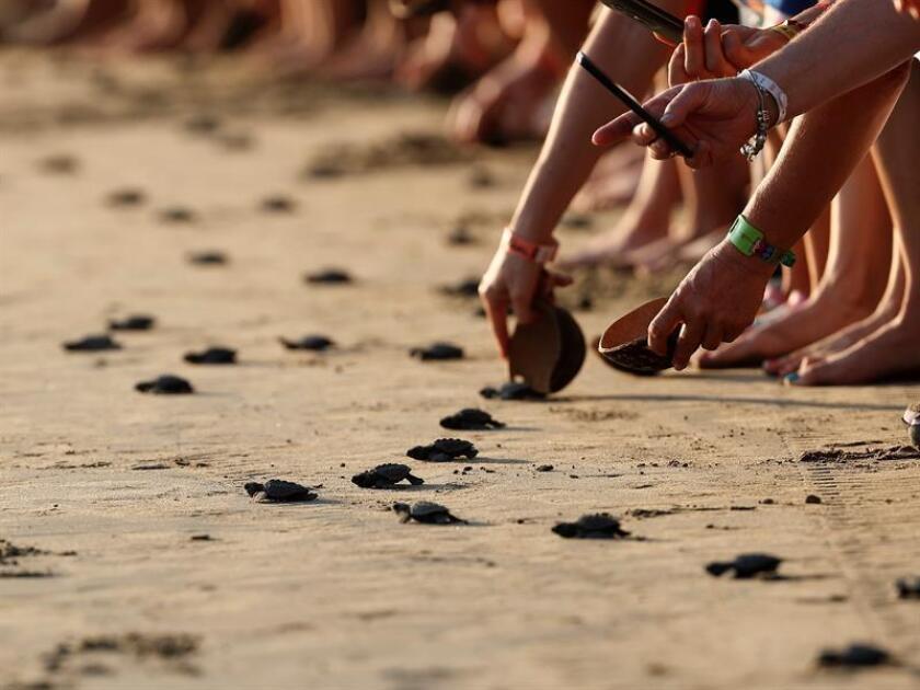 Tenistas del Abierto Mexicano se unen a liberación de tortugas en Acapulco