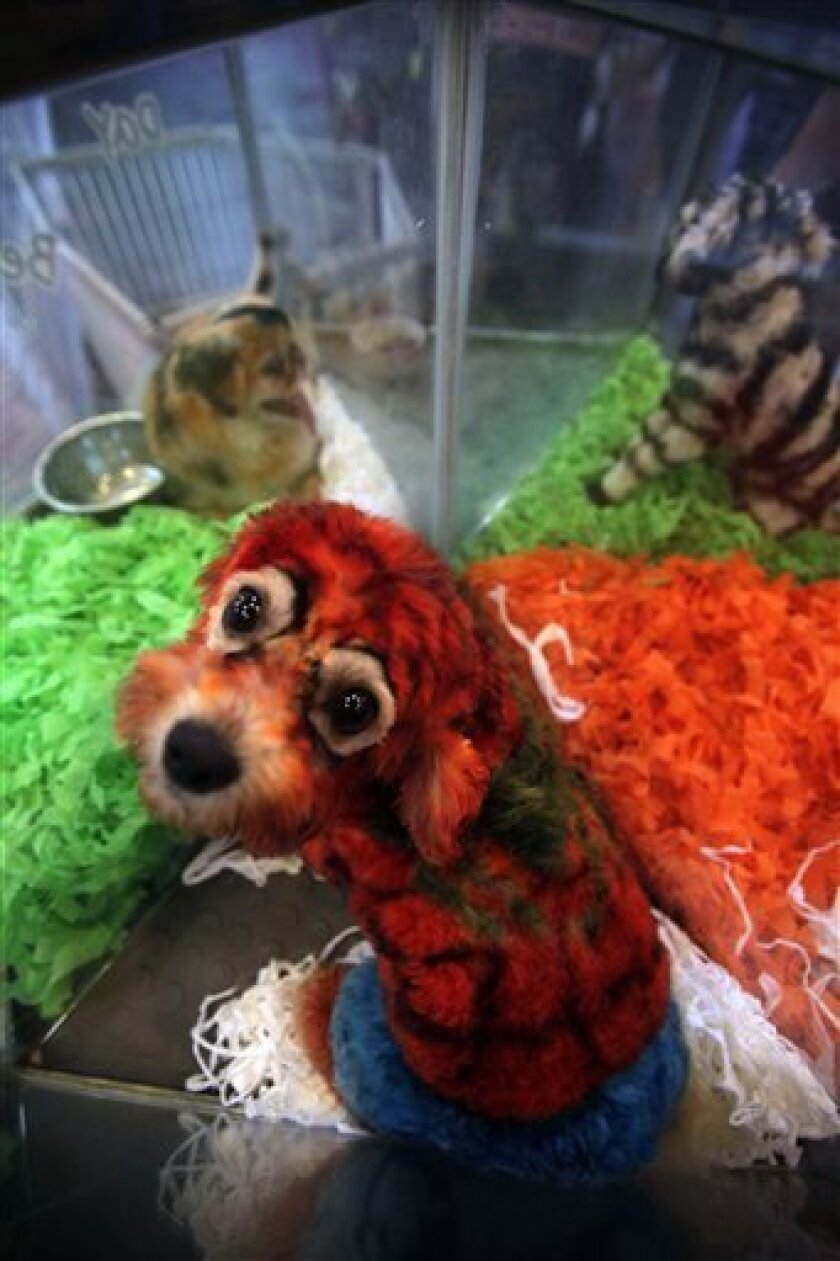 Dog Tired Of Your Pet S Look Try A Doggie Dye Job The San Diego Union Tribune