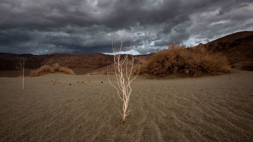 A plant stands over desert sands near Lone Pine, Calif. as a series of strong storms moves into California on Jan. 8, 2017.