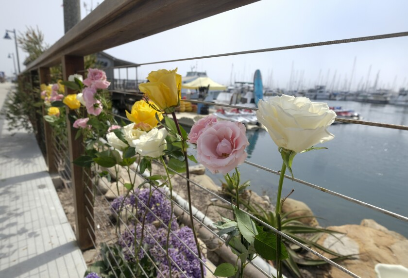 Flowers are placed along a fence at Santa Barbara Harbor in memory of the California boat fire victims.