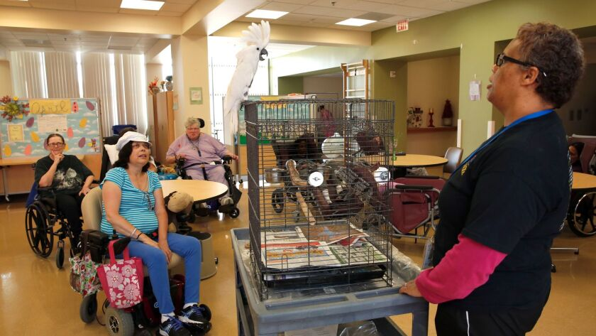 April 24, 2014. Santee, CA. Edgemoor Hospital in Santee has a live-in pet therapy bird named, Du