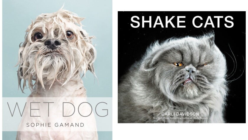 """""""Wet Dog"""" and """"Shake Cats"""""""