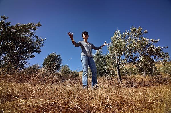 Antoinette Addison on the 25-acre olive orchard in the Santa Ynez Valley that she owns with her husband, Shawn. They first planted olive trees in 2000 and dreamed of becoming a high-end producer of artisanal oils.