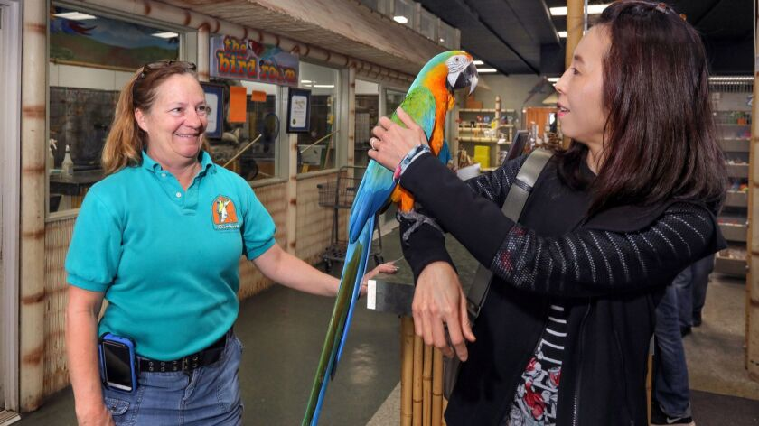 "Sharon Petrarca, left, owner of Bird Haven, watches as long time customer Akino Tsuchiya holds ""Copias,"" a Catalina Macaw for sale there. Akino stopped by to visit and say good-bye to Sharon and the employees there because she heard the business is closin"
