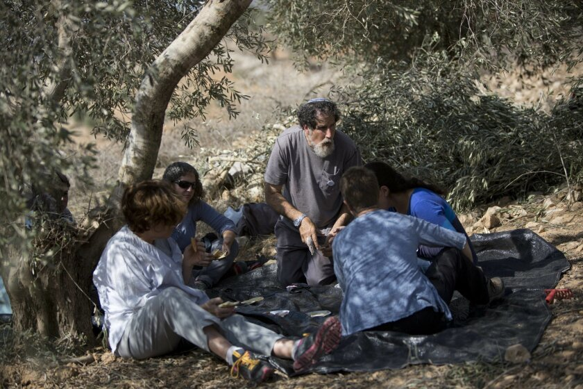 In this Sunday, Nov. 1, 2015 photo, Israeli activist Rabbi Arik Ascherman, center, rests in a Palestinian olive grove during the harvest, in the village of Burin near the West Bank city of Nablus. Ascherman's right middle finger is still bandaged from a recent confrontation in the West Bank, when a