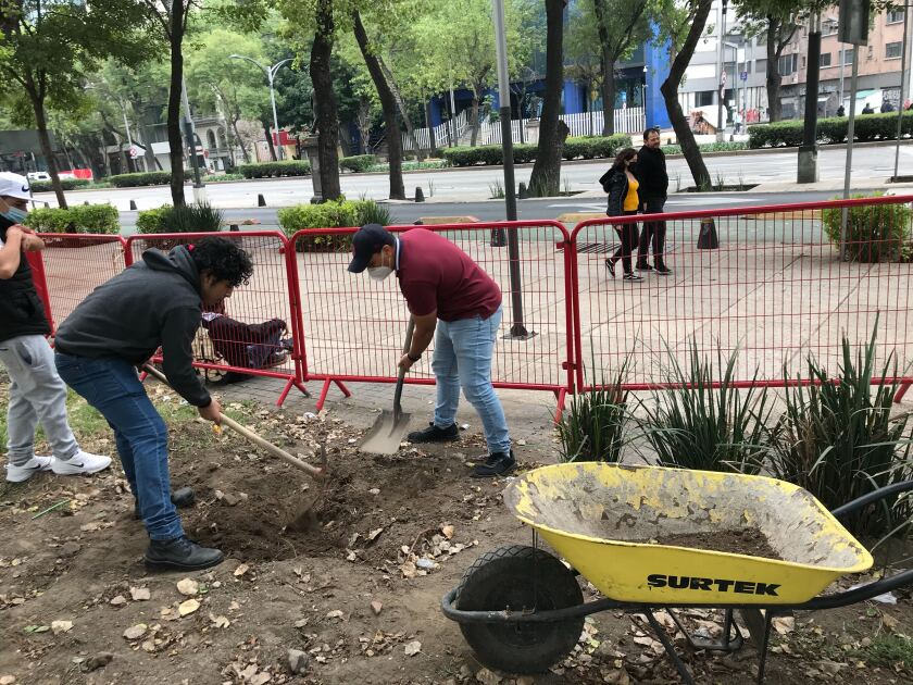 People at work at the cannabis garden steps from Mexico's Senate.